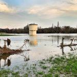 Hitdorfer Hochwasser Februar 2020